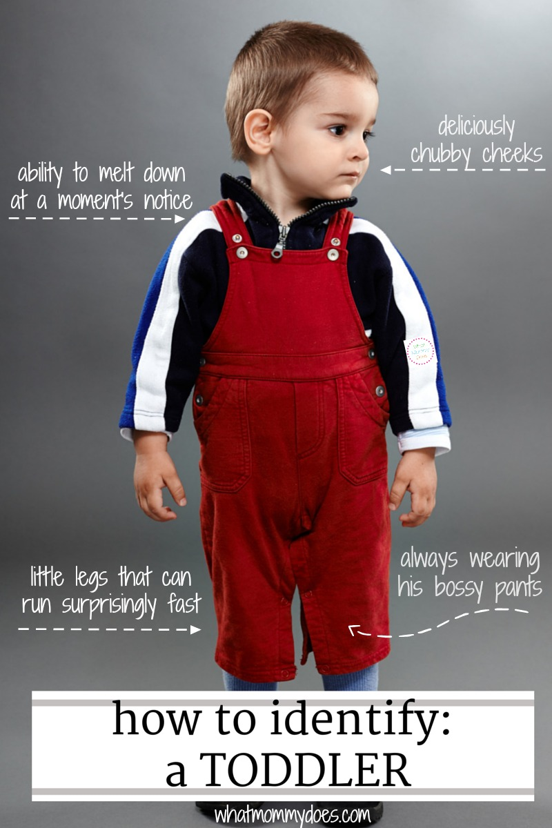 how to identify a toddler WhatMommyDoes