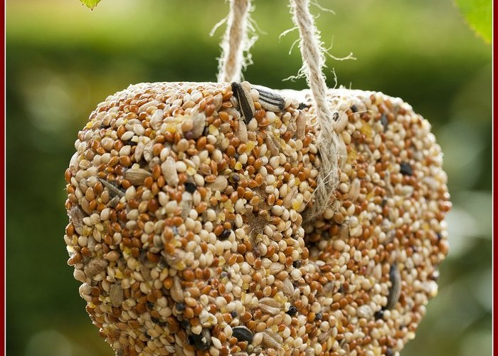How to Make a Bird Seed Ornament